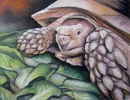 Sulcata Tortoise by Melinda Saminski