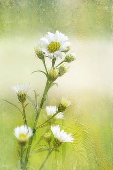 Wild Flowers by Joan Bertucci