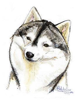 Husky Siberiano by David Iglesias