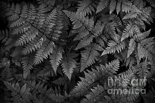 Ferns by Steve Patton