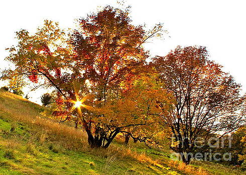A Golden Glowing Autumn Sunset by Jay Nodianos