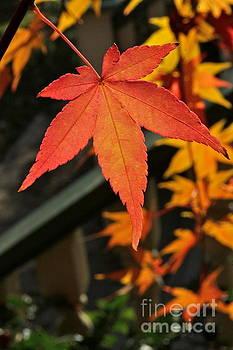 A Leaf by Jay Nodianos