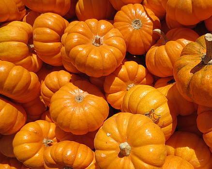 A Peck of Pumpkins by Brooke Finley