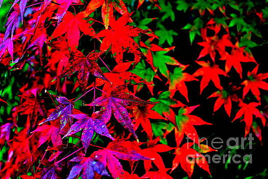 Abstract Leaves by Jay Nodianos