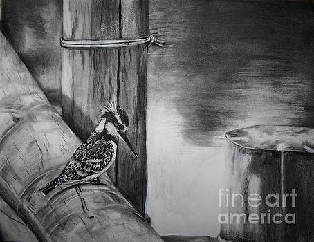African Pied Kingfisher by Laneea Tolley