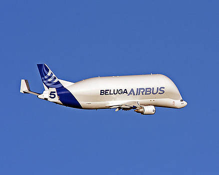 Airbus Beluga by Paul Scoullar
