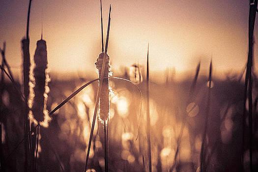 Amber Glow by Jason Naudi Photography