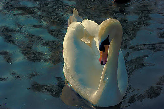 Angelic Swan by Peter Nix