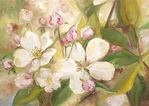 Apple Blossoms  by John and Lisa Strazza