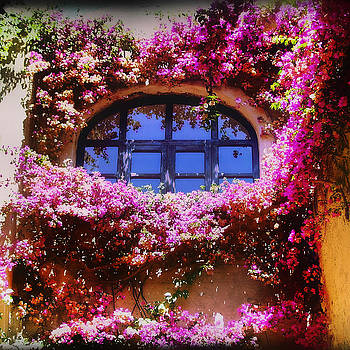 Arch in bloom by Nathalie Deslauriers