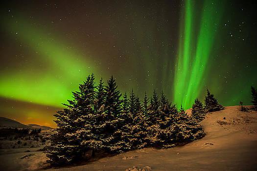 Aurora Borealis forest by Petur Mar Gunnarsson
