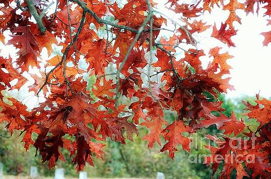 Autumn Leaves by Scott Mitchell