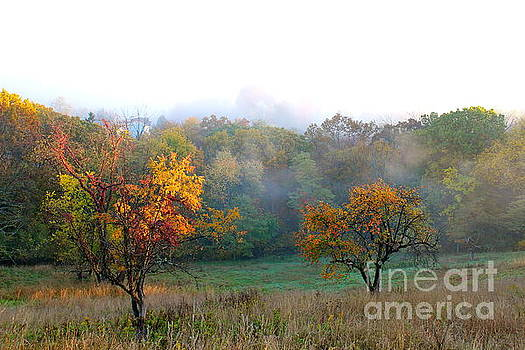 Autumn Morning Fog by Jay Nodianos