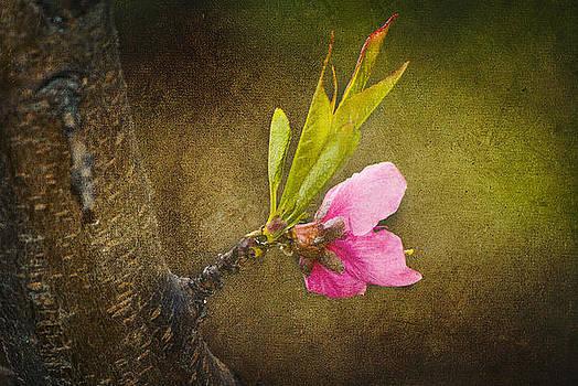 Awakening Of Nature by Vjekoslav Antic