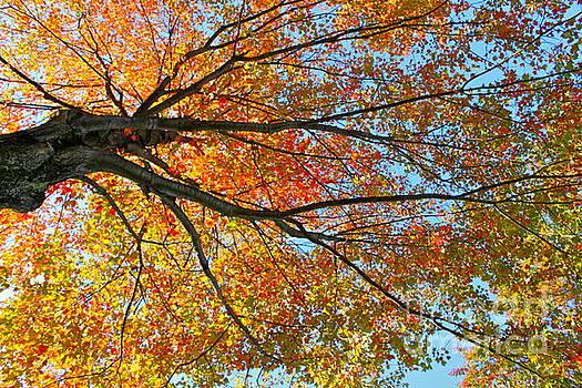 Awe-tumn Leaves by Jay Nodianos