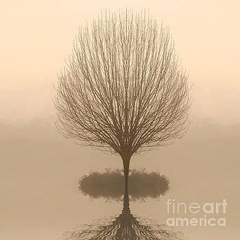Bare Tree in Fog at Dawn by Cheryl Casey