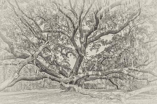 Beaufort Oak in BW by Bill LITTELL