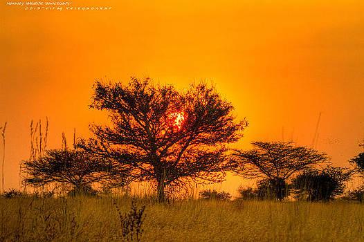 Beautiful Evening by Virag Yelegaonkar