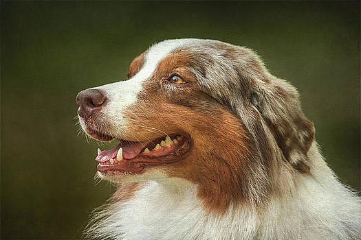 Best Friend by Vjekoslav Antic