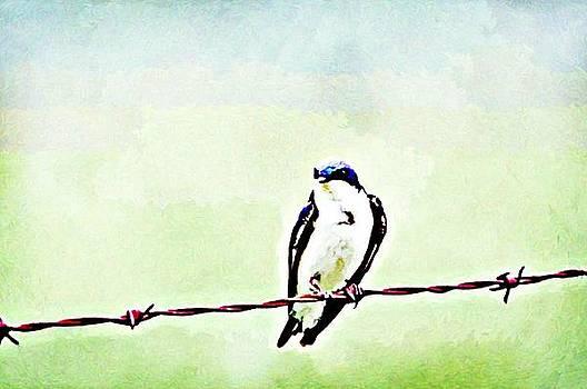 Bird On A Wire by Lauranns Etab
