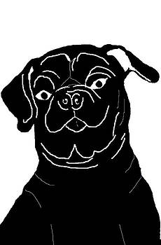 Black and White Pug by Chris Goulette