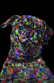 Black Polkadot Pug by Chris Goulette