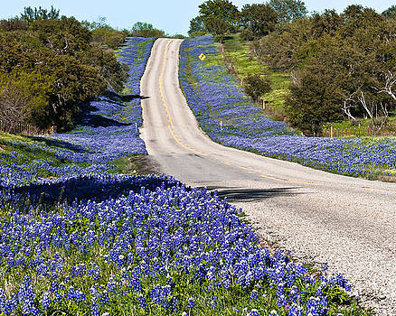 Bluebonnet Lined Hwy by Thomas Pettengill
