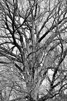 Bones of a Tree by Teresa Dixon