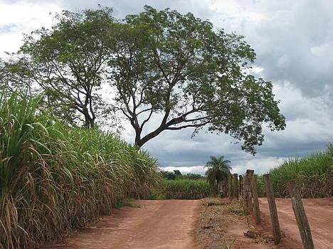 Brasil Rural 1 by Maria Akemi  Otuyama