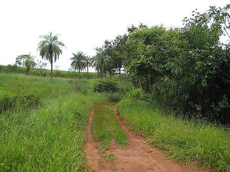 Brasil Rural 3 by Maria Akemi  Otuyama