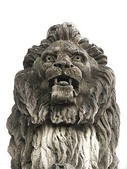 Brooks Lion 2 by Suzanne Barber