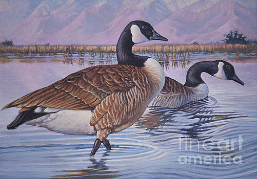 Canadian Geese by Rob Corsetti
