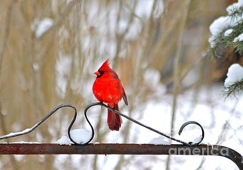 Cardinal on the Gate by Jay Nodianos