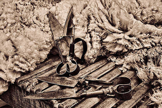 Chocolate Sepia Blades and Wool by Helen Akerstrom Photography
