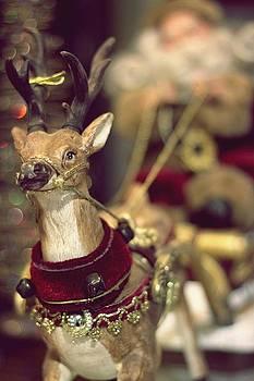 Christmas Reindeer by Daliya Photography