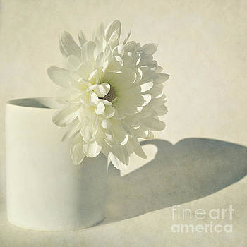 Chrysanthemum Shadow by Lyn Randle