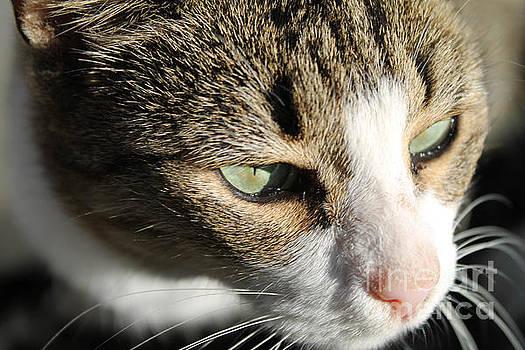 Curious Barn Cat by KJ Bradley