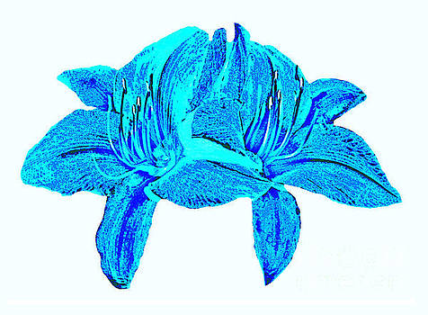 Daylily Blooms In Shades Of Blue by ImagesAsArt Photos And Graphics
