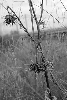 Dead Weeds by Dylan Donnelly
