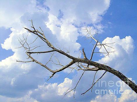 Death Of A Tree by Dawne Dunton