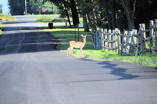 Deer Crossing by Gary Pavlosky