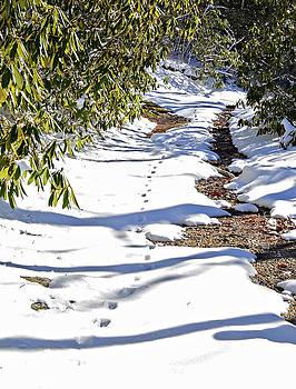 Deer Trail by Susan Leggett