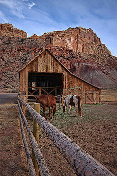 Desert Ponies by Rick Lewis
