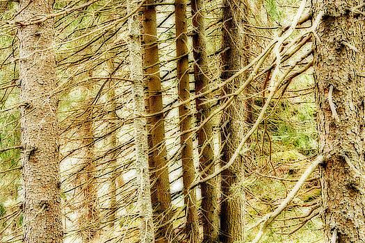 Dreamy Trees by Maurizio Incurvati