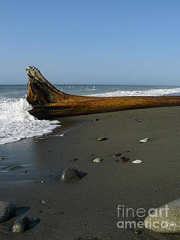 Driftwood by Jane Ford