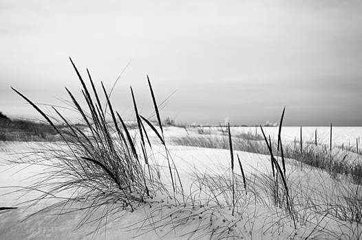 Dune Grass and Snow 2 by Steve Johnson