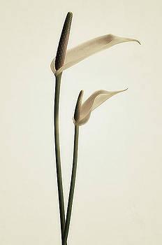 Elegance by Lotte Funch