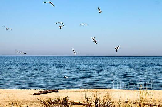 Erie Birds and Beach by Jay Nodianos