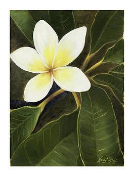Everywhere in Hawaii by Nancy Edwards