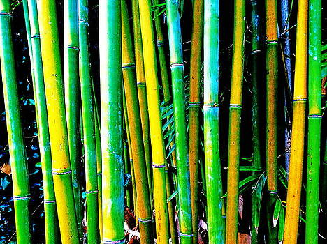 Exposed Bamboo by Yahvid Photography